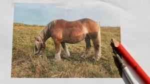 Hest foto